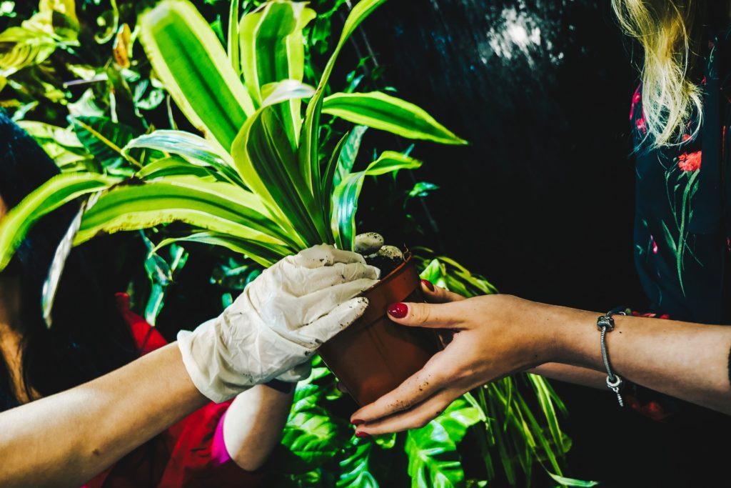 wspólne zabawy z roślinami