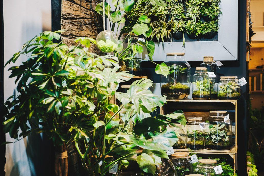 pokój wypełniony roślinami