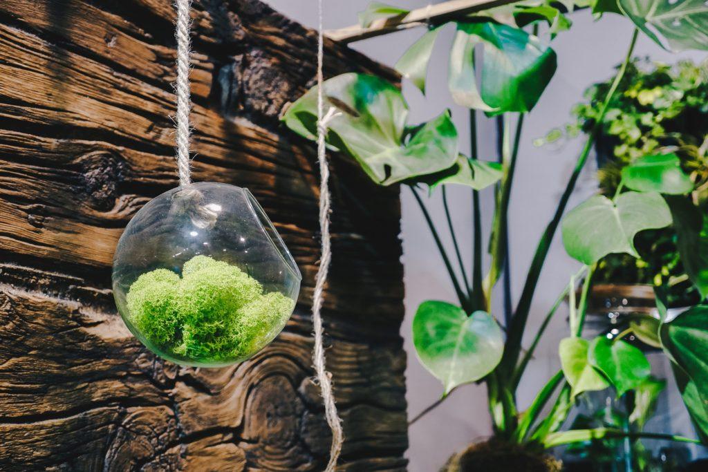 wiszące rośliny, rośliny w szkle