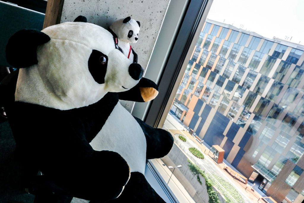 panda w biurze