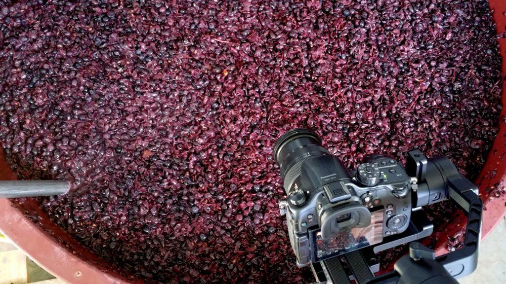 produkcja wina w wieliczce